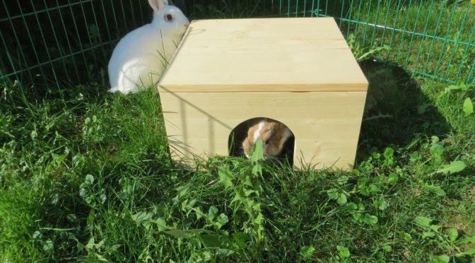 Ein Bungalow für die Kaninchen